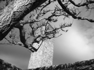 taken looking up through the branches at St Rules tower, the oldest part of the Cathedral.  It's staggering to think about how much history happened in the footsteps where I now walk.