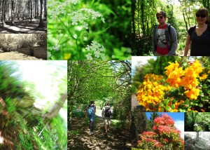 Miscellaneous shots from our wanderings through the woods; it was truly a perfect day!
