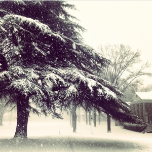 I've always loved this tree; Belk Hall is to the right. photo by Sami Maree '14