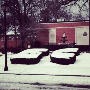Erskine bushes outside of the library, photo from Sarah Baroody '16